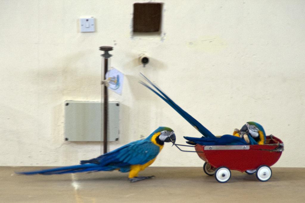 Парк птиц, пернатые артисты