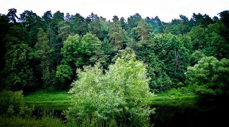 Природа села Дубровицы