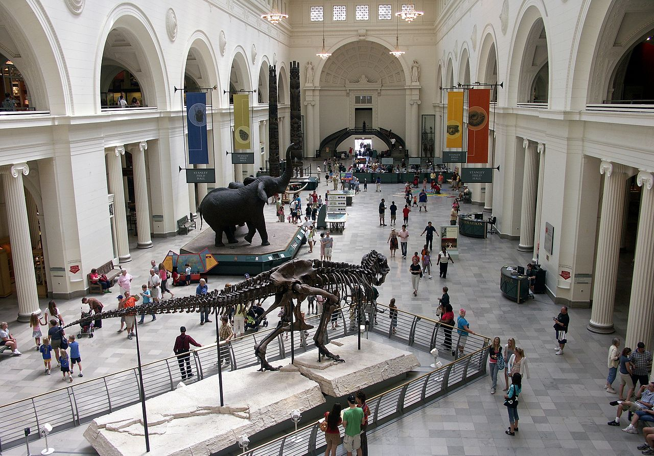 visit natural museum history The smithsonian national museum of natural history is one washington, dc's best museums, learn about the natural history exhibits and see visiting tips.