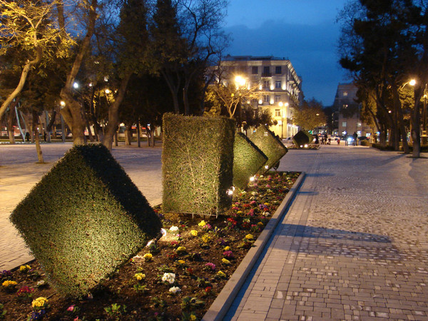 Декоративные кустарники на бульваре Баку