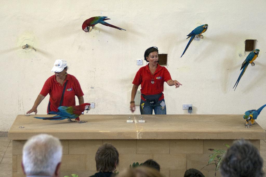 Парк птиц, шоу