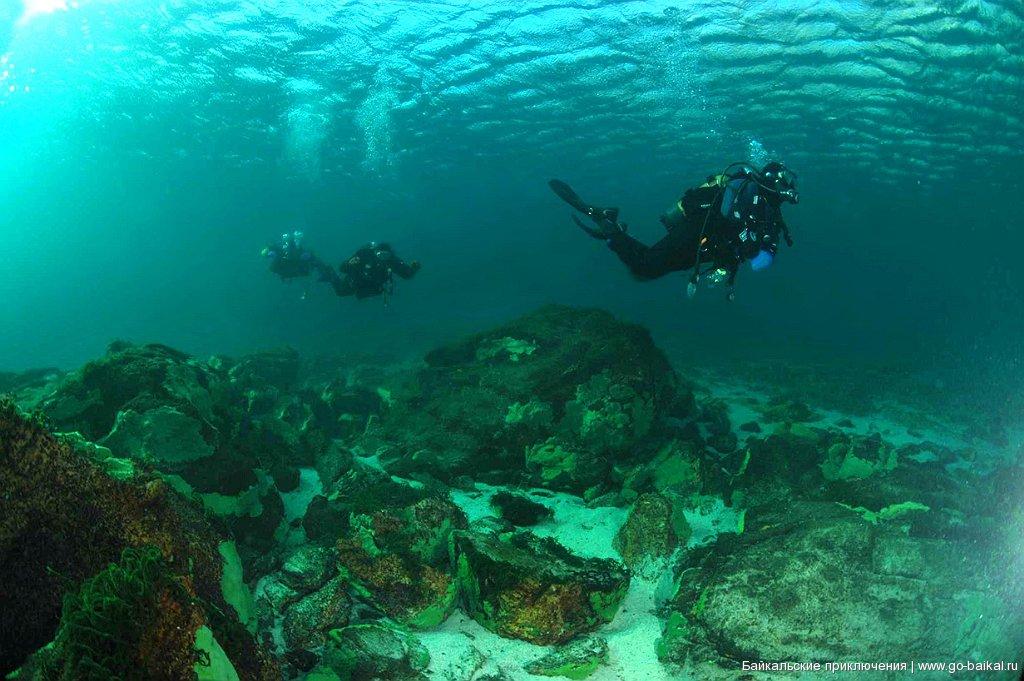нужно подводный мир байкала фото советуют такие