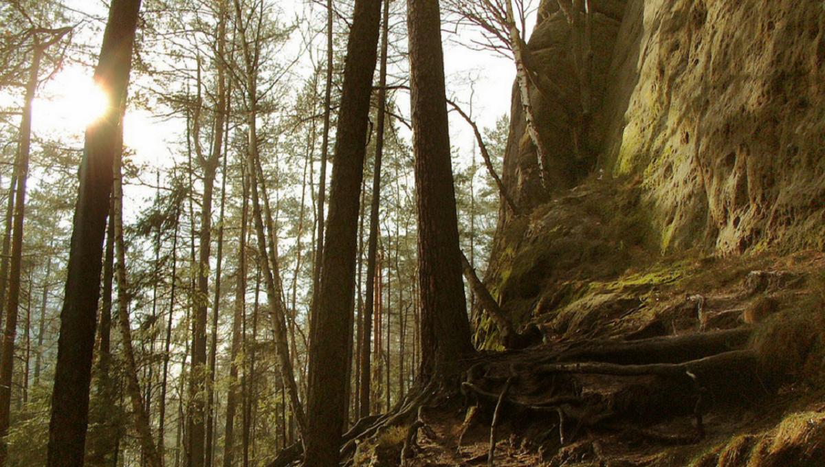 Горно-лесной ландшафт Саксонской Швейцарии