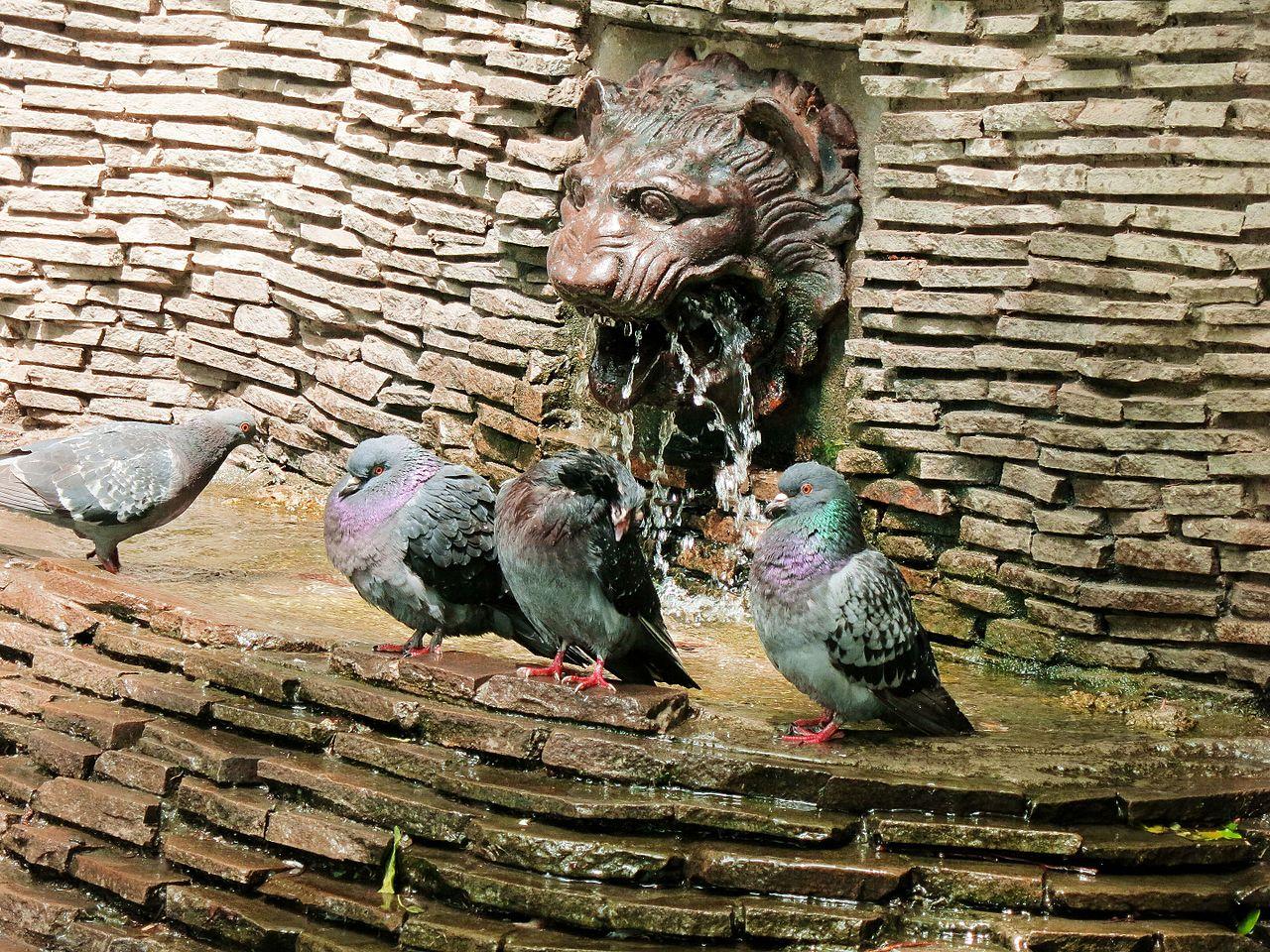 Городской сад в Краснодаре, голуби у фонтана