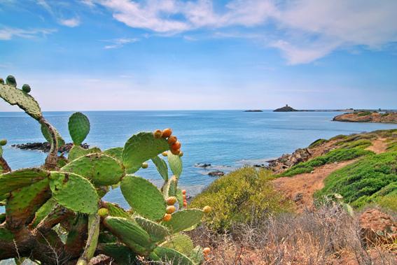Кактусы, Сардиния.jpg