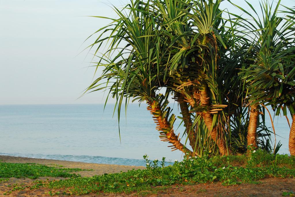 Пальмы на пляже Май Кхао, Пхукет
