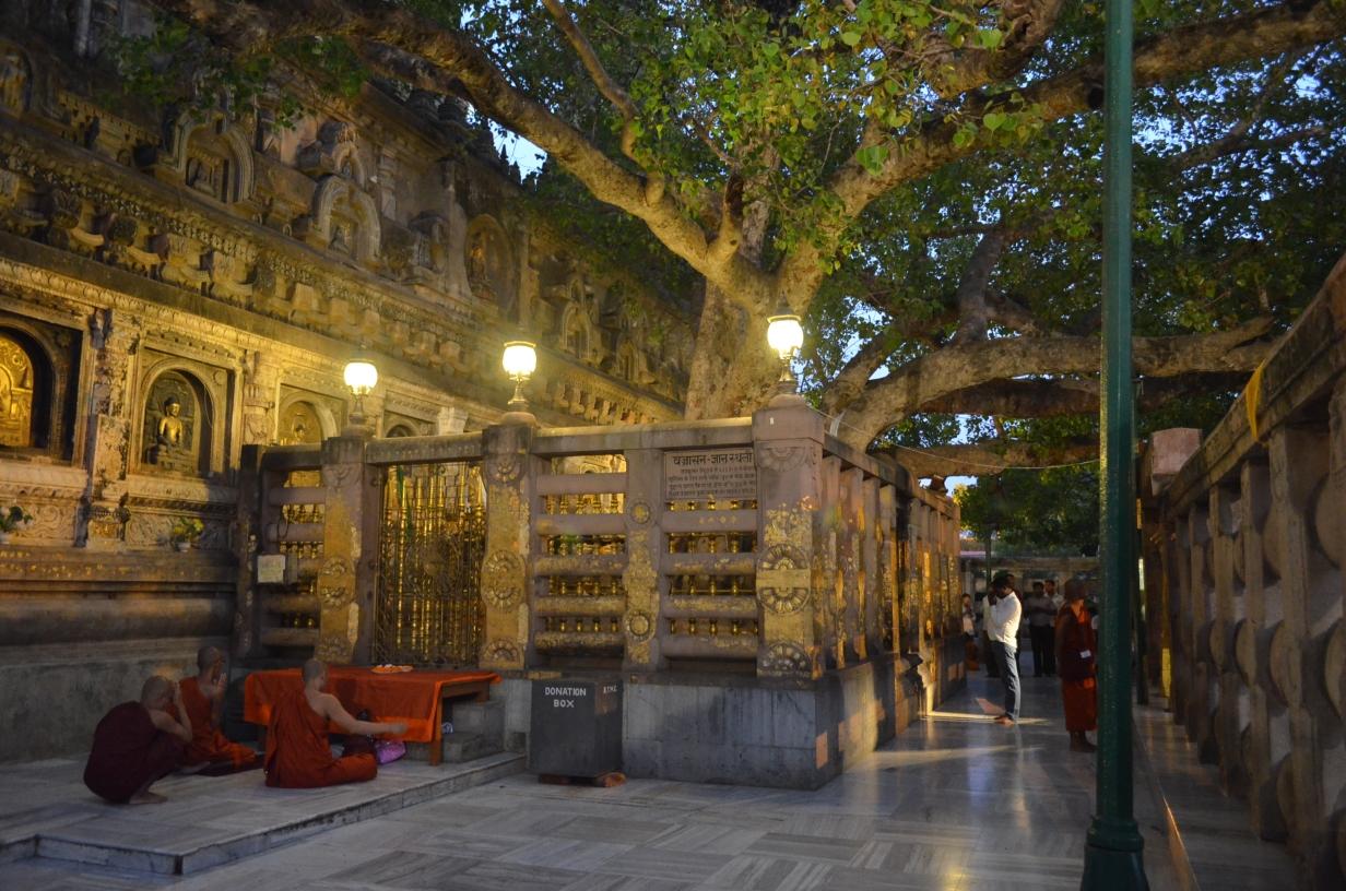 Храм Махабодхи, святое дерево Бодхи