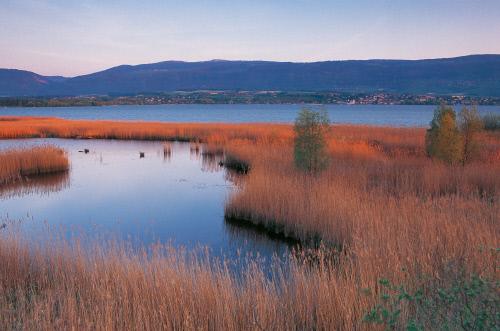 На южном берегу озера Невшатель, Ивердон-ле-Бен.jpeg