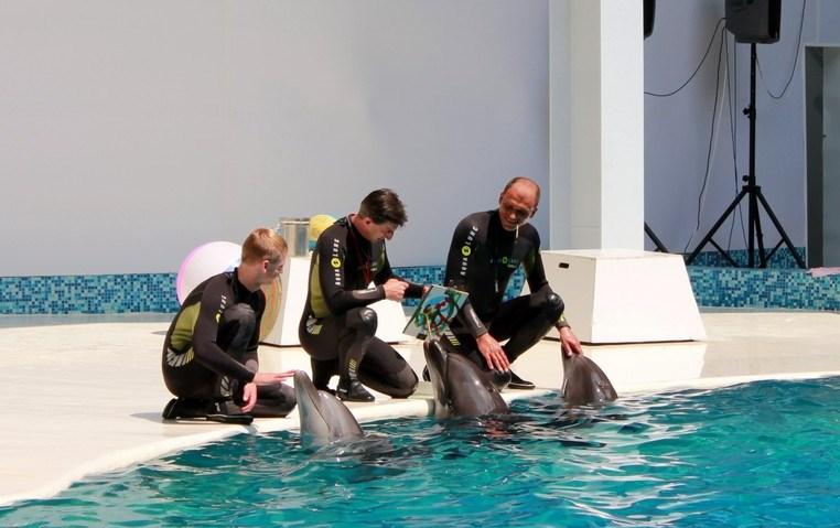 Дельфины, Дельфинарий в Евпатории