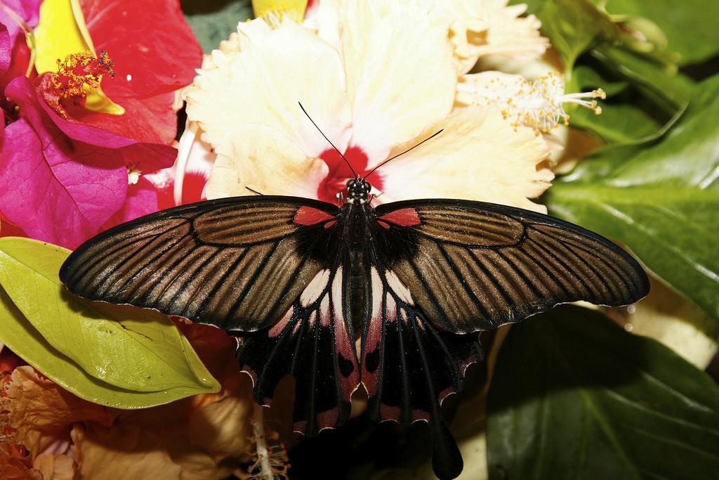 Сад бабочек Пхукета, Таиланд