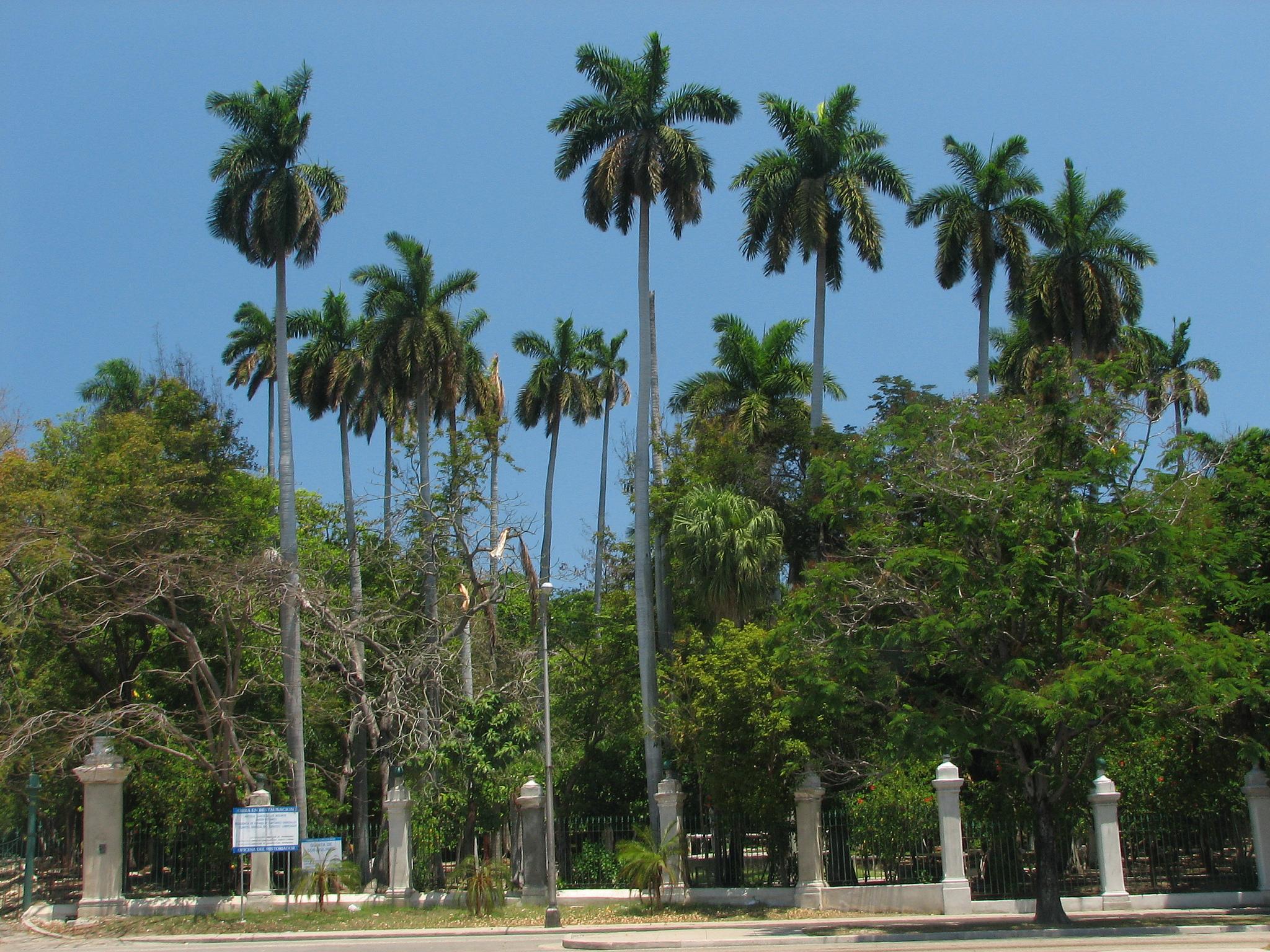 Национальный ботанический сад в Гаване