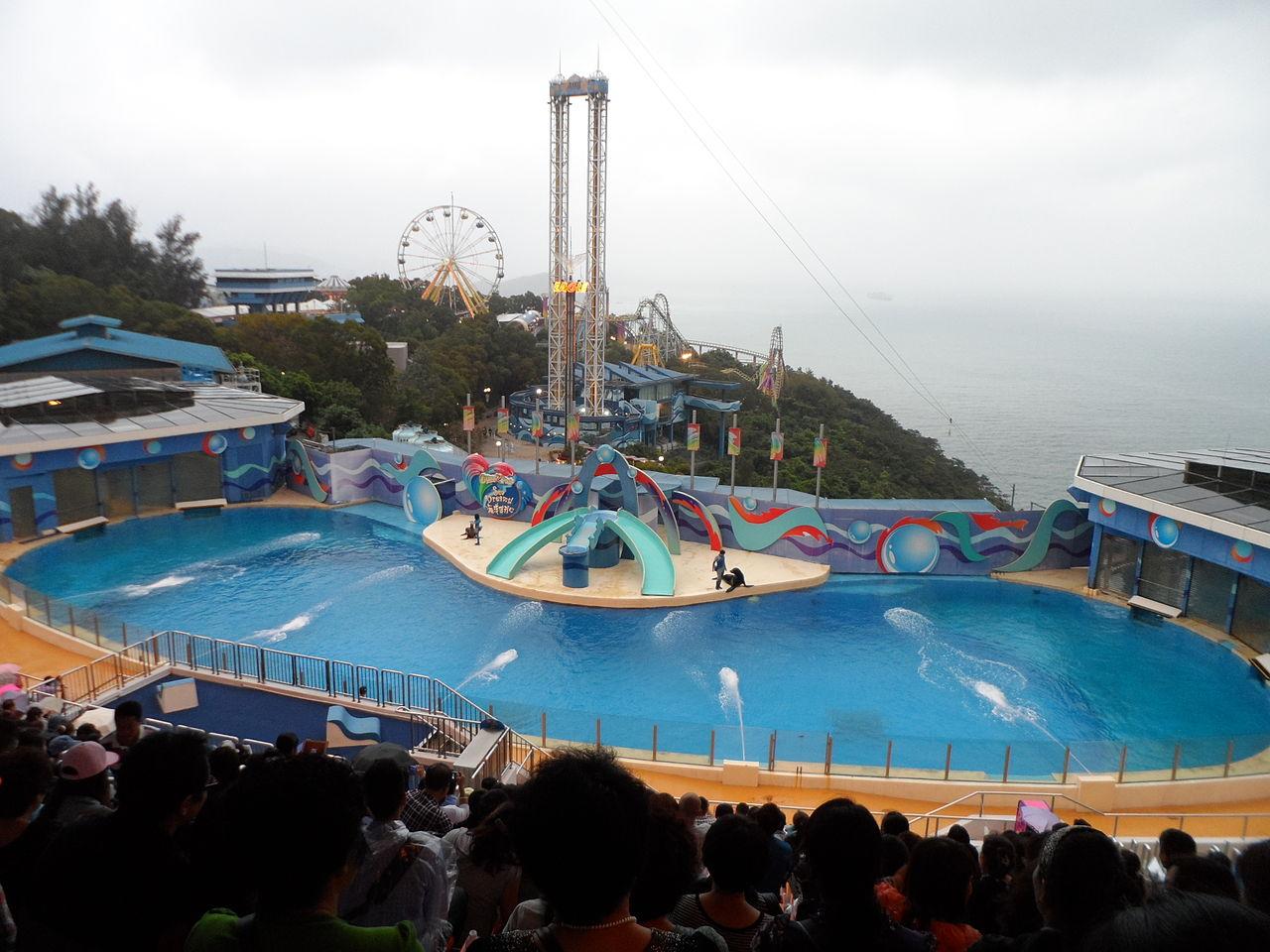 Океанический парк в Гонконге, морские львы