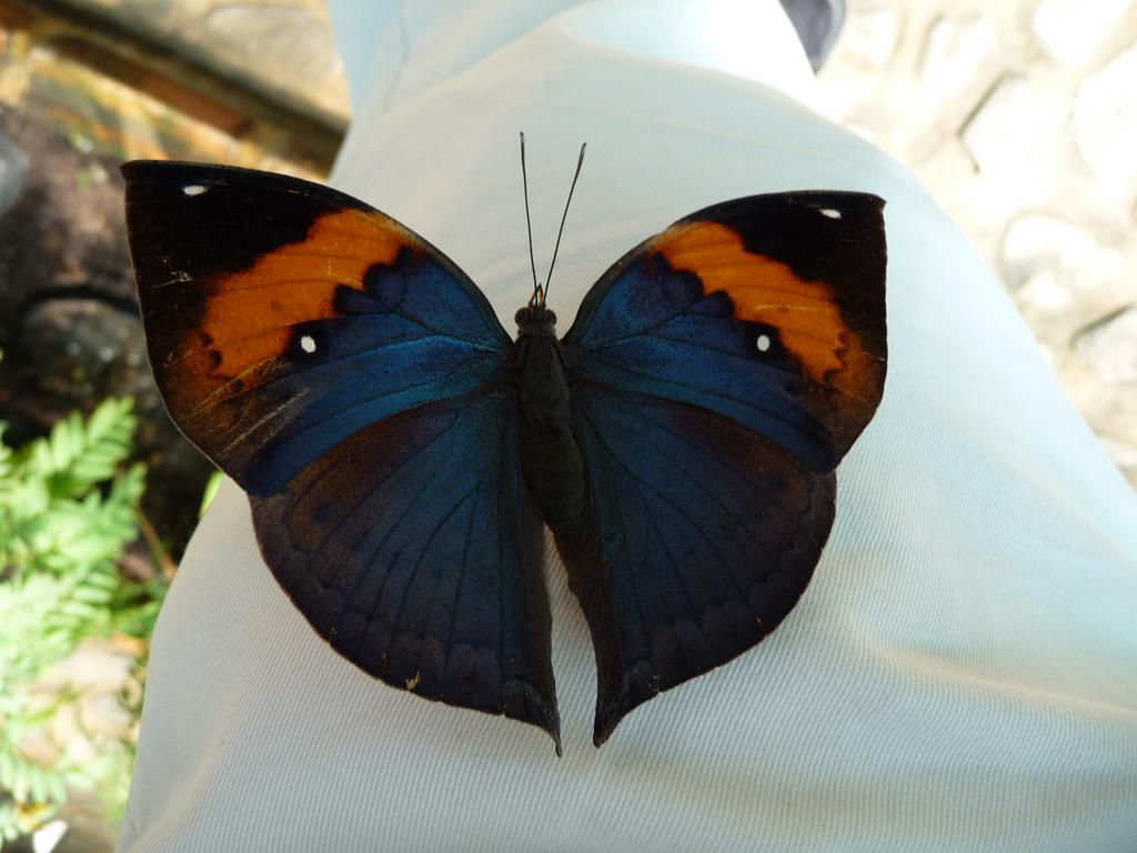 Сад бабочек Пхукета, на экскурсии