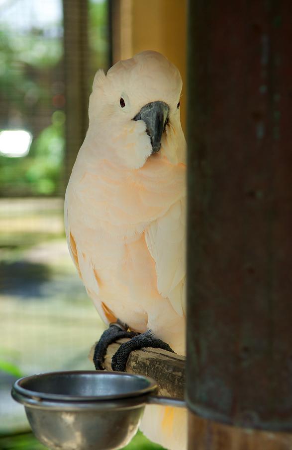 Редкие птицы здесь частые гости