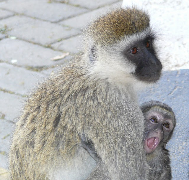 Мама и малыш на улицах Кении