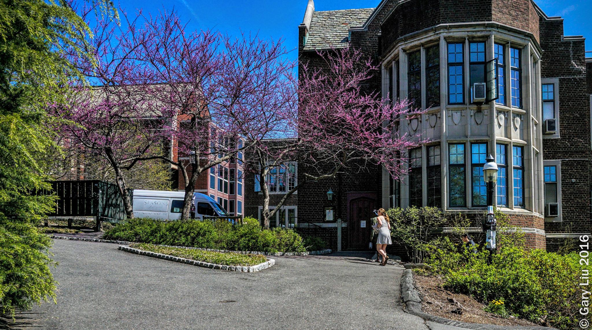 Принстонский университет, Нью-Джерси