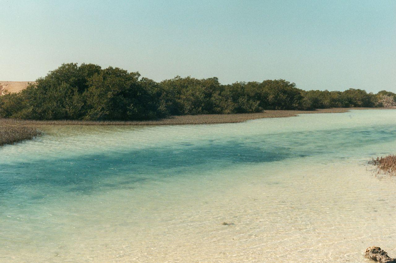 Национальный парк Рас-Мохаммед, мангровая роща