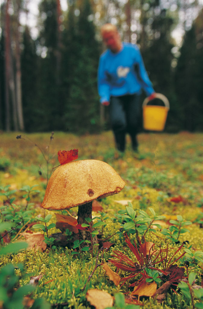 Осенние грибочки в Эстонии.jpg