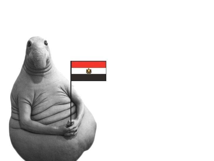 Файл:Сроки возобновления полетов в Египет по-прежнему не определены.jpg