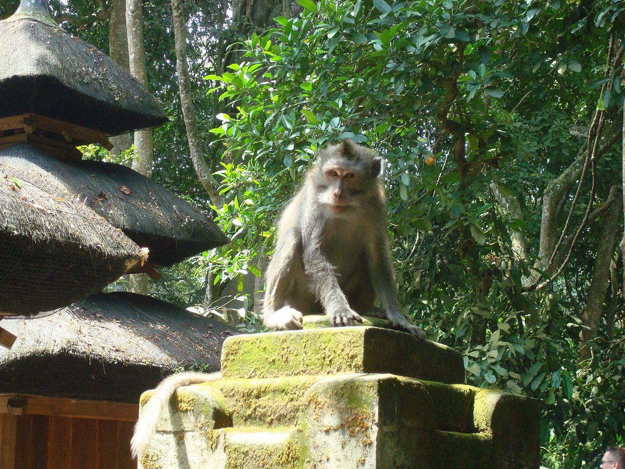 В Лесу обезьян на Бали