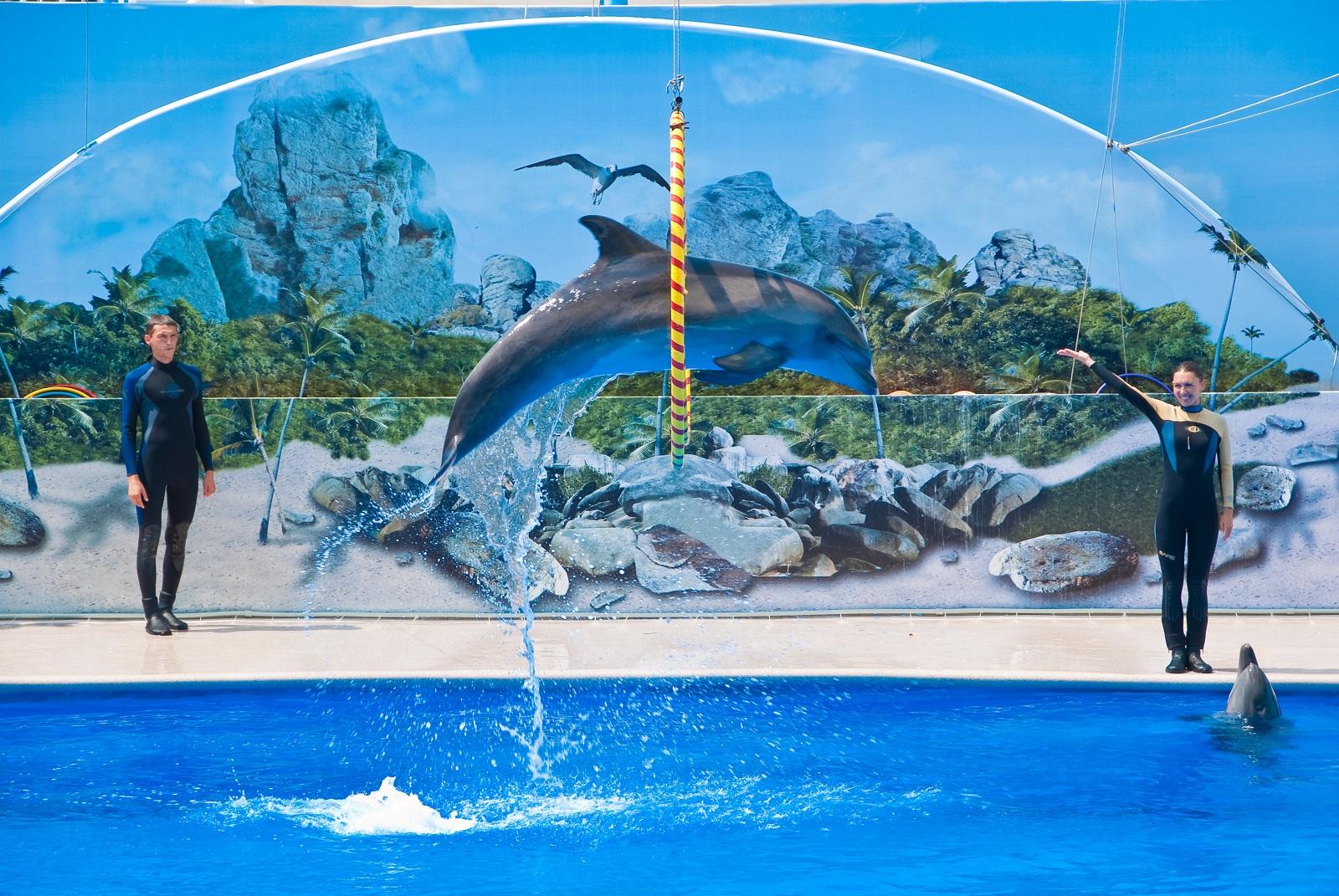 Дельфинарий в Севастополе, выступление