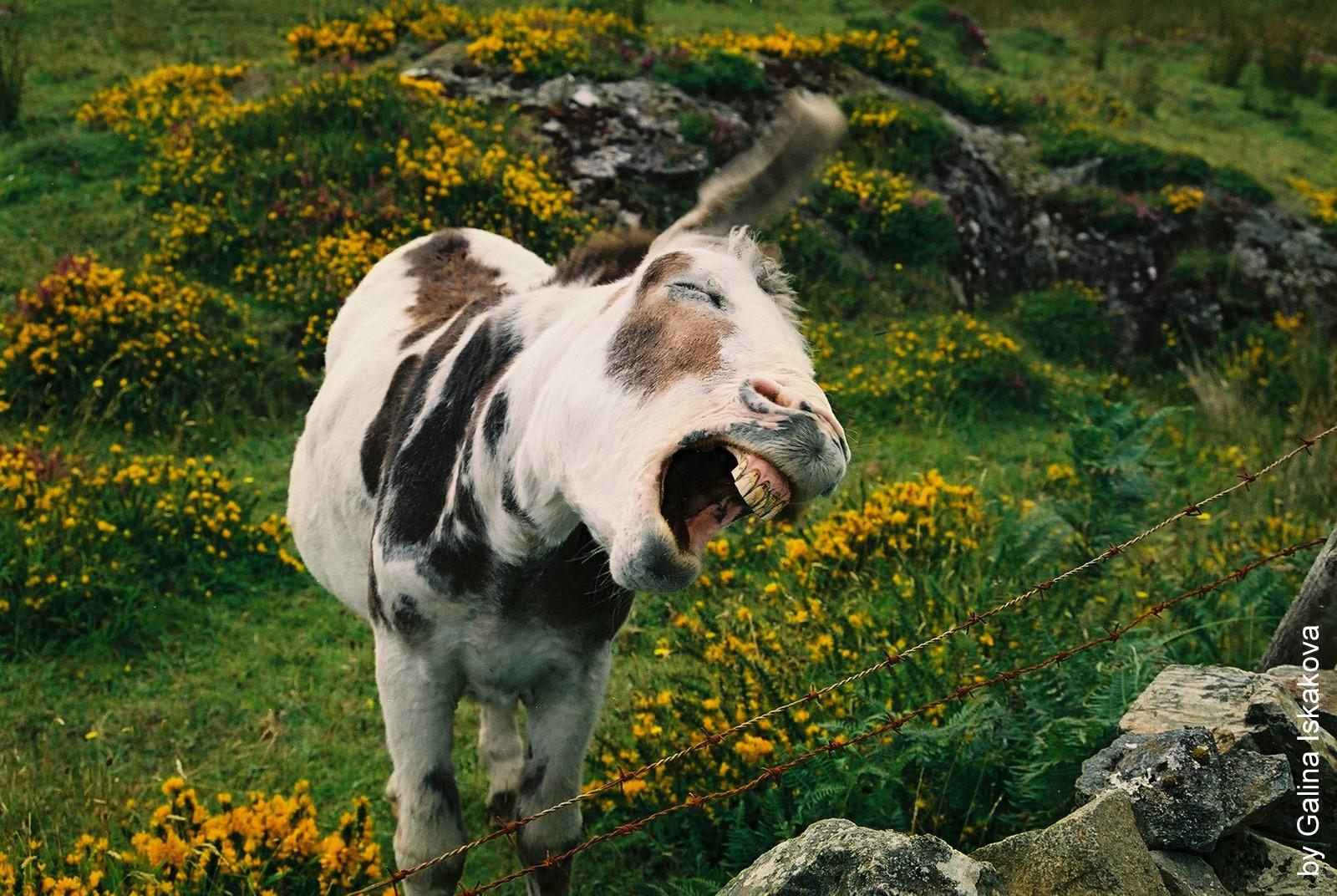 фото животного мира ирландии малейшем подозрении недомогание