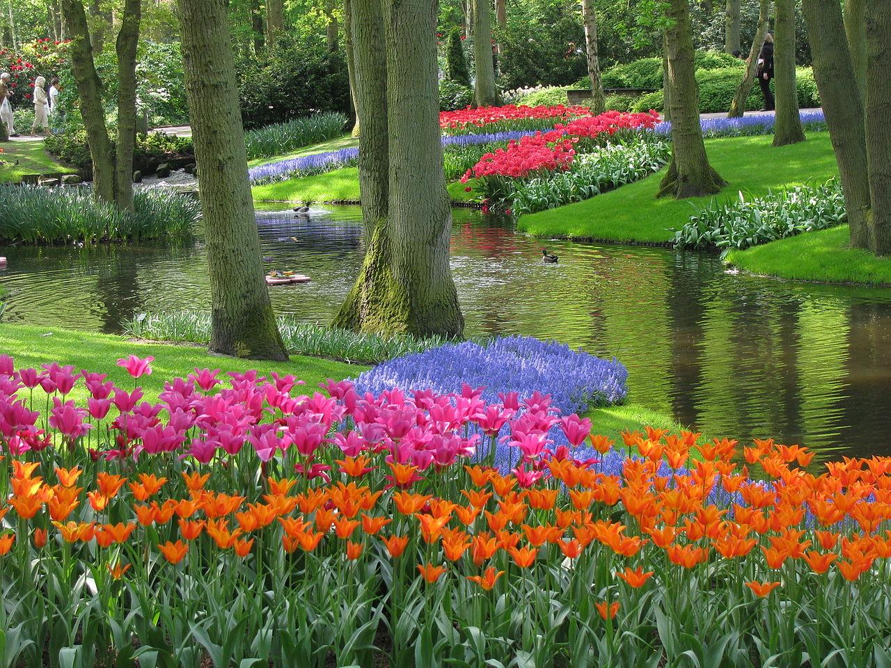 Цветы Кекенхофа