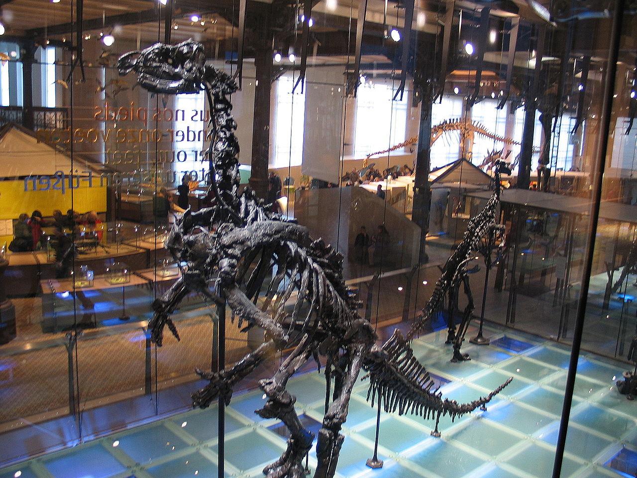 Музей естественных наук в Брюсселе, игуанодон