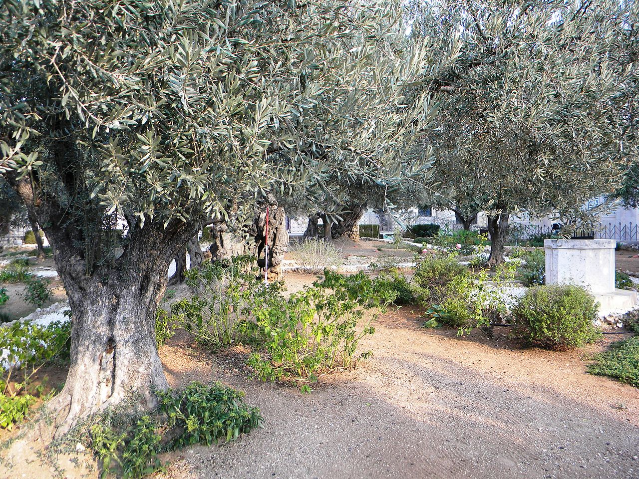 Гефсиманский сад, место молитвы