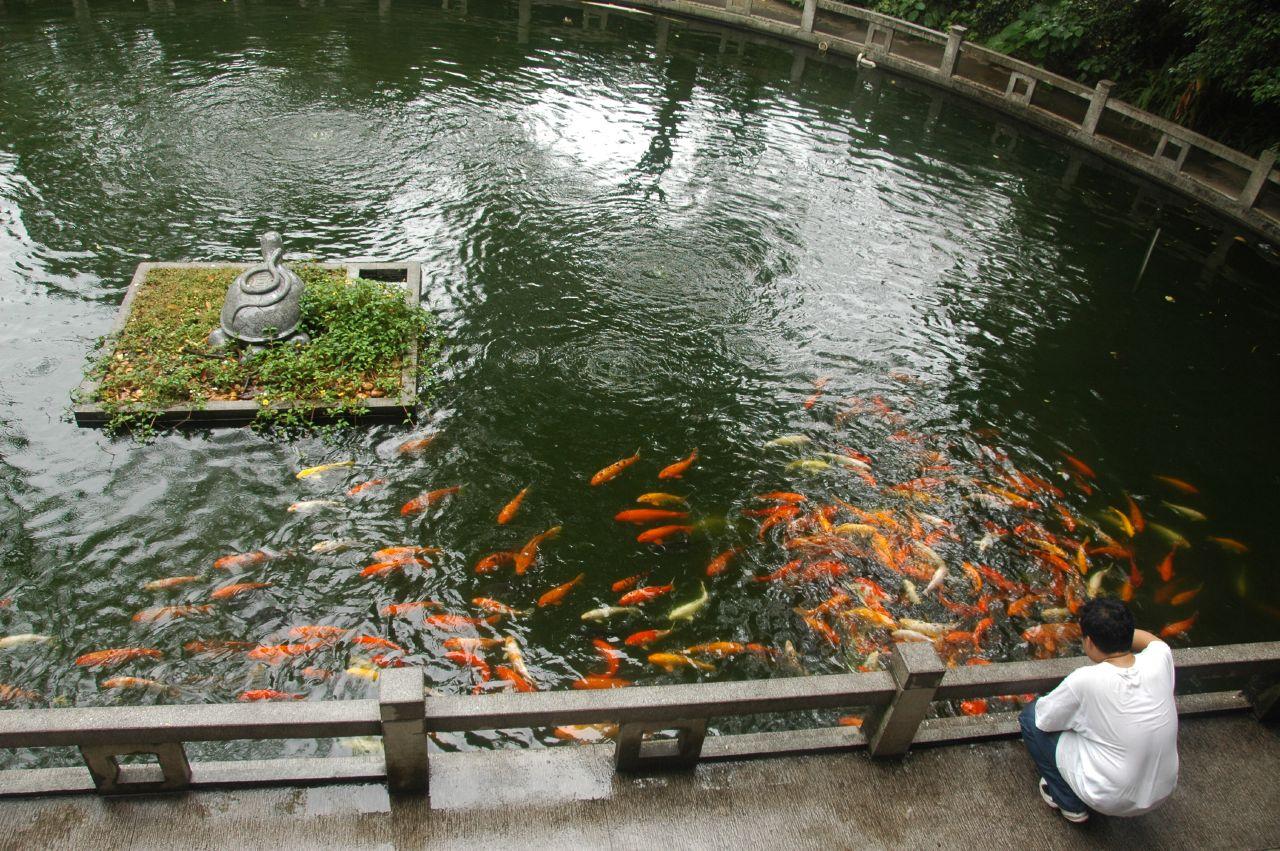 Парк Байюнь в Гуанчжоу, золотые рыбки