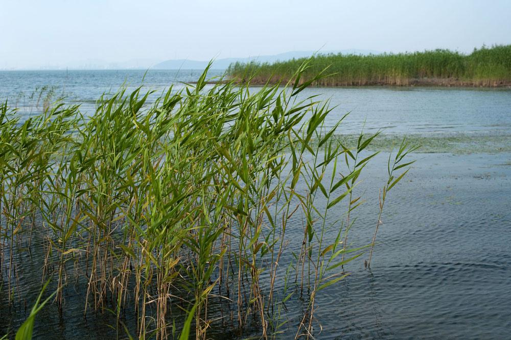 Вид на озеро Тайху