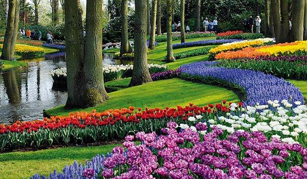 Цветочные поля парка Кекенхоф.jpg