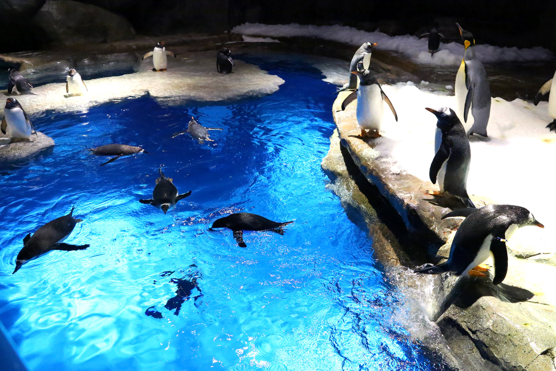 Океанический парк в Гонконге, пингвины