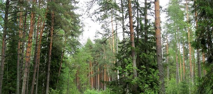 Сокольский бор, Парк Русский Север, Вологодская область
