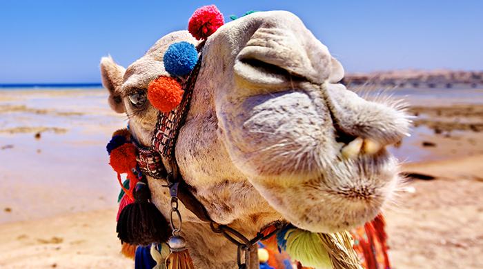 Сколько стоят туры в Египет на новогодние праздники 2.jpg