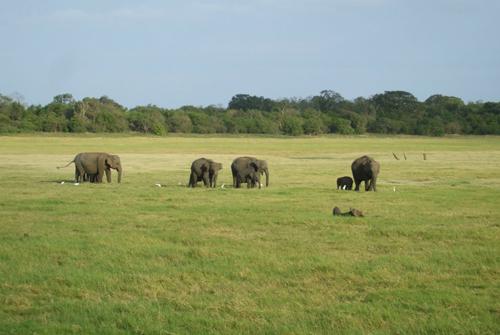 Национальный парк Мадуру Оя.jpg