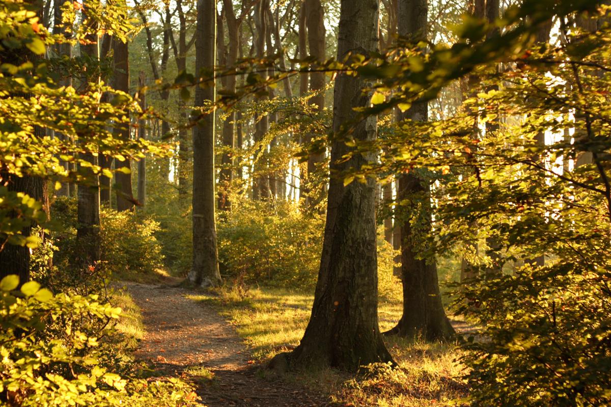 Венский лес, Австрия