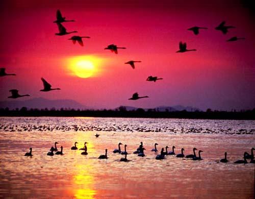 Закат солнца в заповеднике перелётных птиц на острове Хондо.jpg