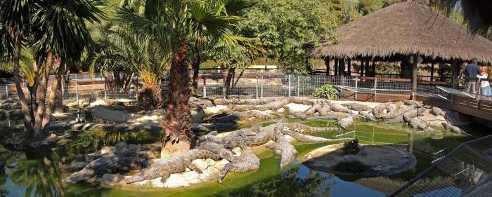 Крокодилья ферма