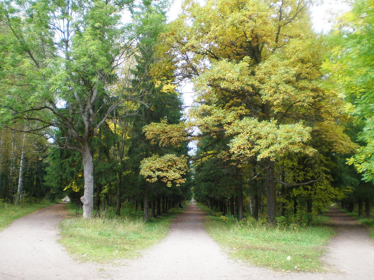 Три аллеи при входе в парк Сильвия (Гатчина)