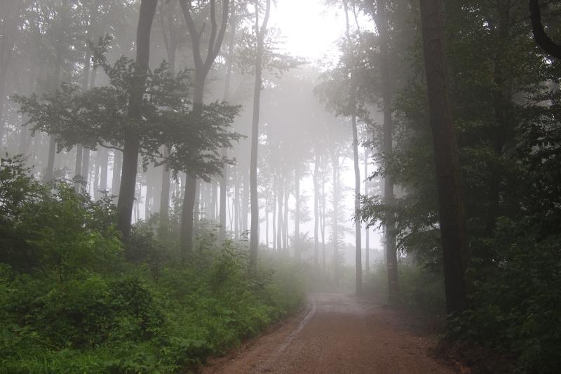 Венский лес в утреннем тумане, Австрия
