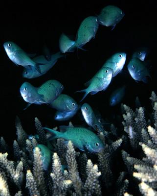 Подводная жизнь Пуэрто-Галеры, Филиппины