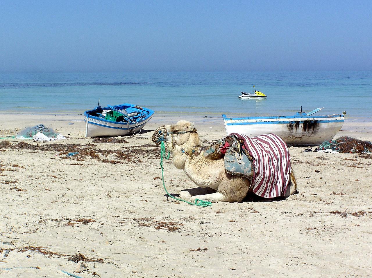 Джерба, рыбацкие лодки и верблюд