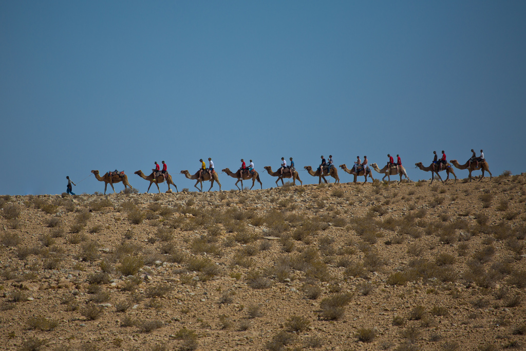 Караван из верблюдов, Пустыня Негев