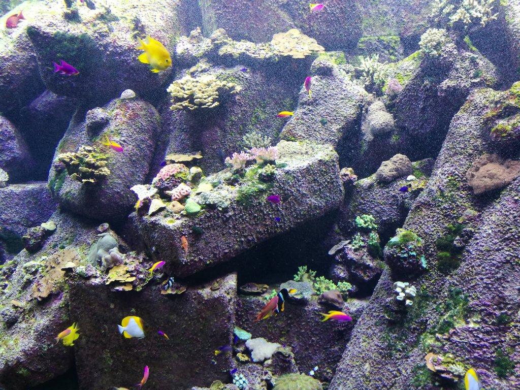 Подводный мир в океанариуме в Дубае, ОАЭ