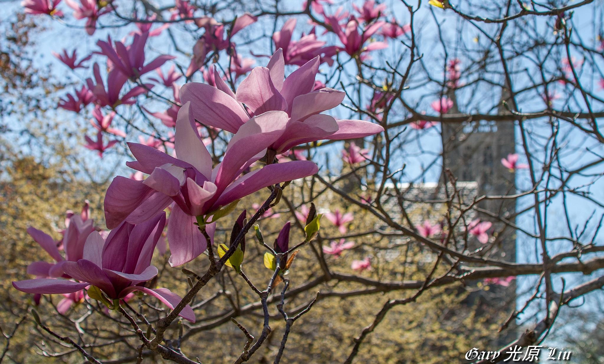 Весна в Принстонском университете
