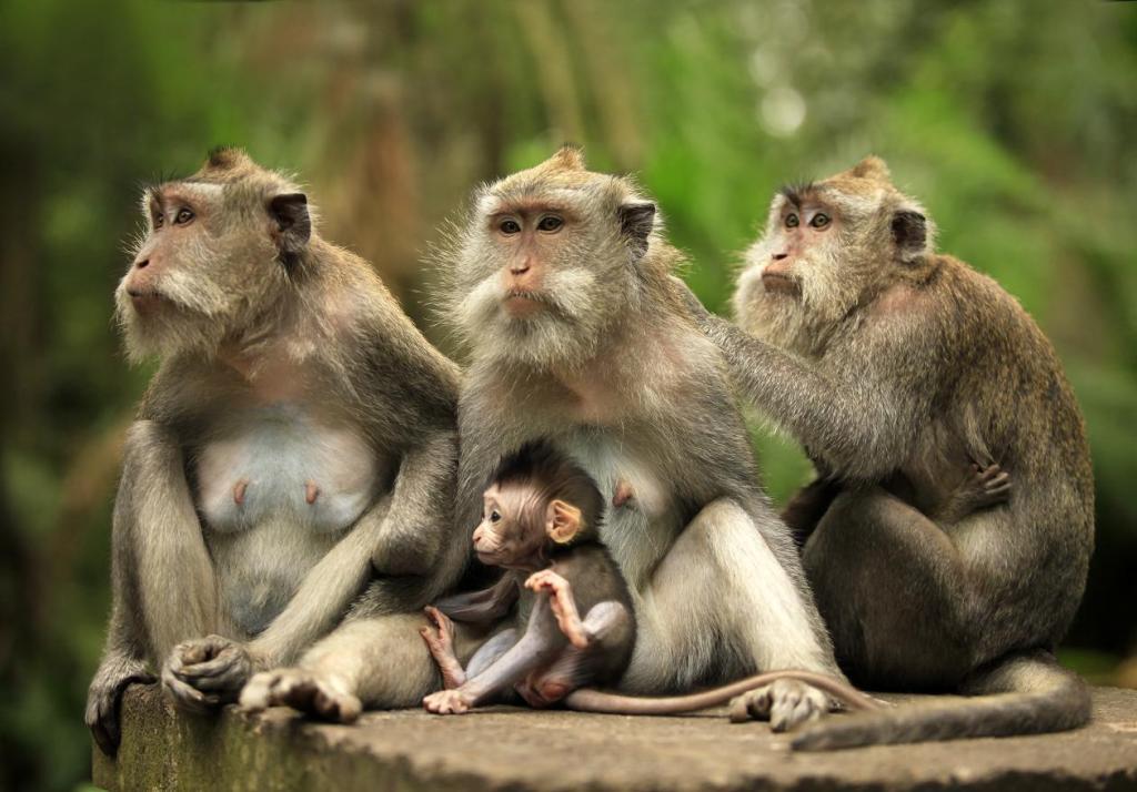 Семейство в зоопарке Бали