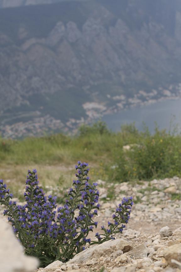 В национальном парке Ловчен