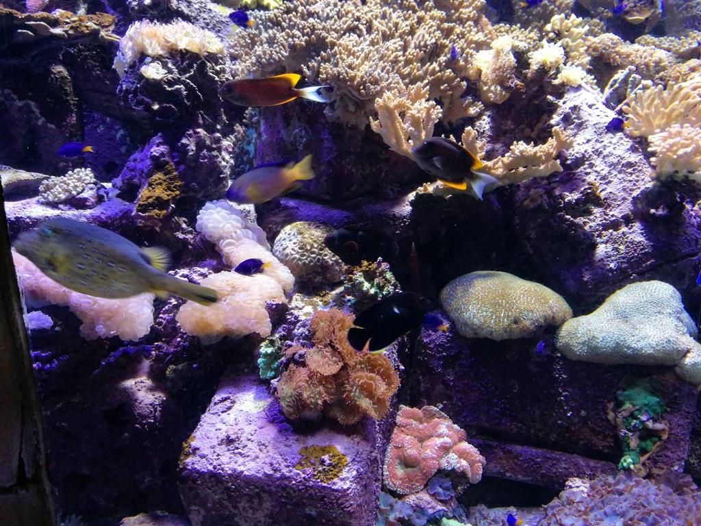 Потрясающий риф в океанариуме в Дубае, ОАЭ