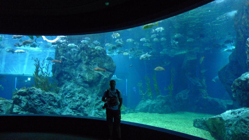 Аквариум Sea Life Bangkok Ocean World в торговом центре Сиам-Парагон, Бангкок